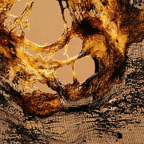 patriciadeisidoro-icaro-fieryhome